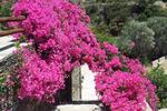 OSTRIA, Rooms to let, Platys Gyalos, Sifnos, Cyclades